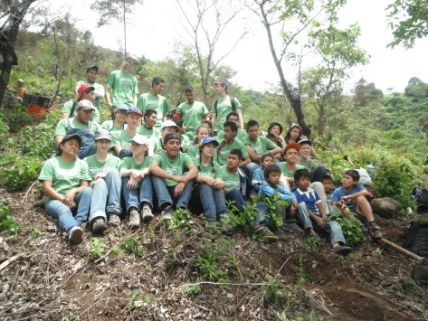 Reforestation 2013
